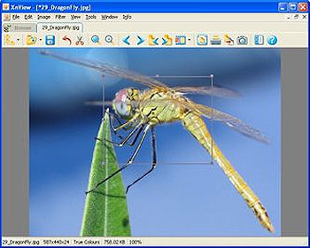 XnView Freeware Image Viewer